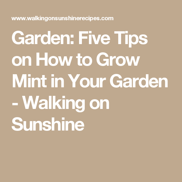 Garden: Five Tips on How to Grow Mint in Your Garden  - Walking on Sunshine