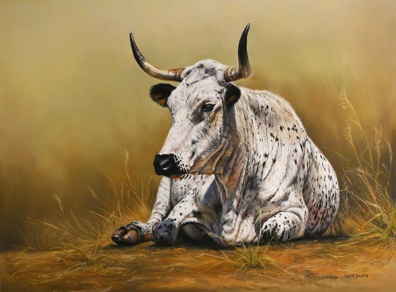 Nguni Cow In 2019 Animal Sketches Cattle Cow Art