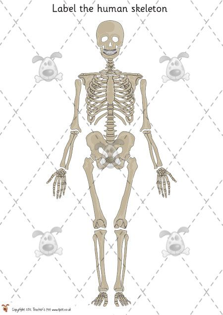 Teachers pet human skeleton labelling simple premium teachers pet human skeleton labelling simple premium printable classroom activities and games ccuart Image collections