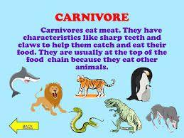 نتيجة بحث الصور عن Pictures Of How Do Animals Eat Their Food Eat Meat Animals Food Chain