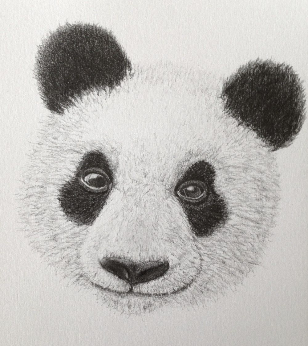 Panda pencil drawing gallery for realistic figurative drawings for