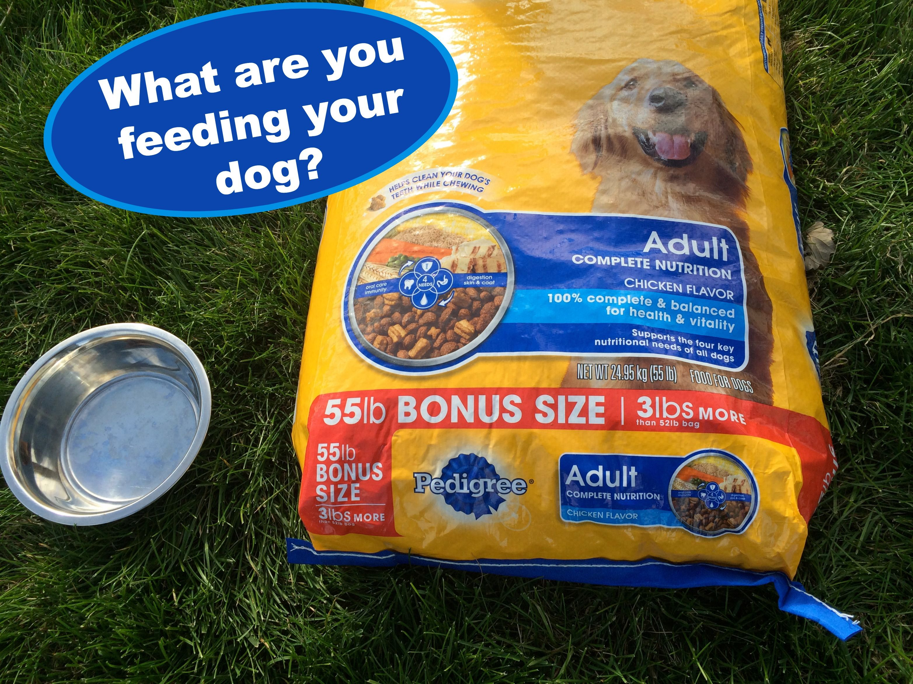 Pet Adoption Month And Pedigree Dog Food What You Can Do To Support