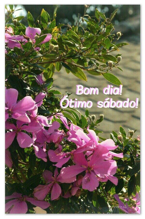 Bom Dia Otimo Sabado Com Imagens Abraco De Bom Dia