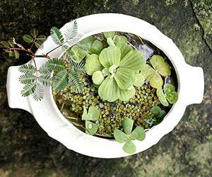 DIY- Lovely Water Garden. More tabletop water garden ideas: http://www.midwestliving.com/garden/container/easy-tabletop-water-gardens/