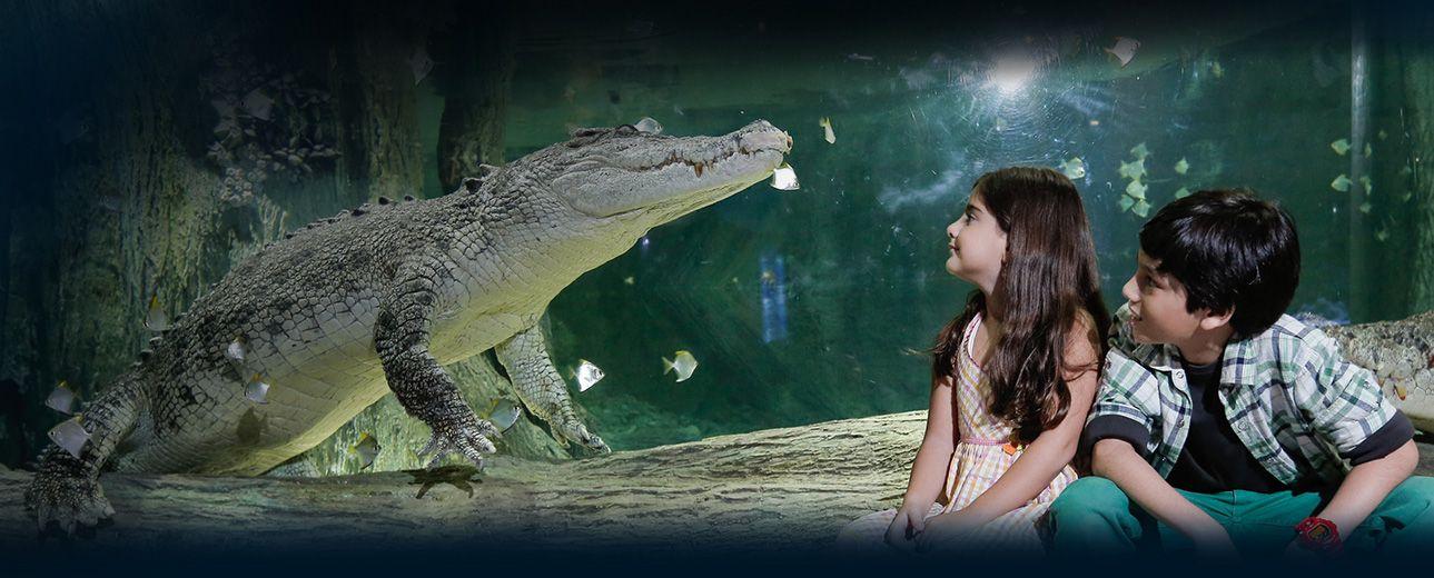 King Crocodile Is a Great Attraction in Dubai Mall