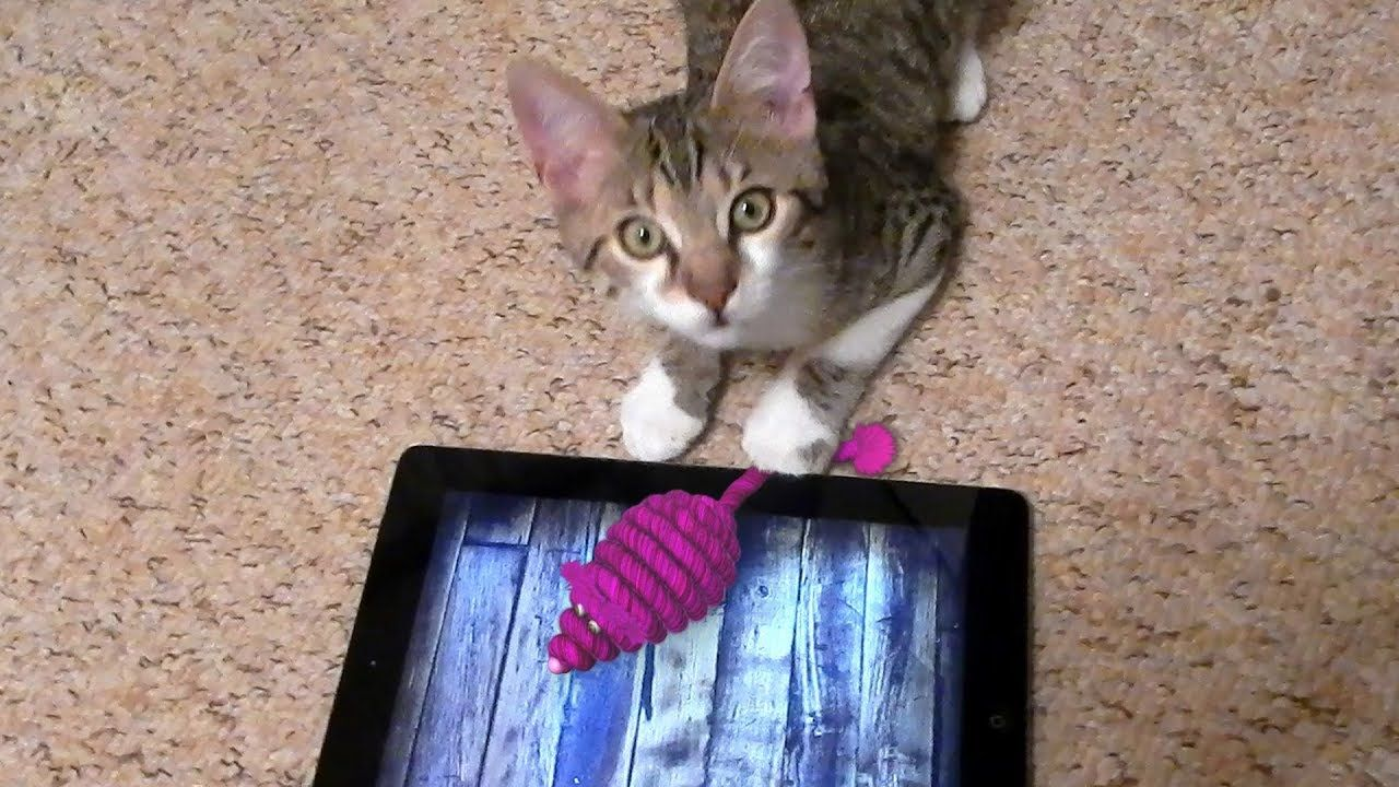 Game for cats This free iPad app proudly proclaims