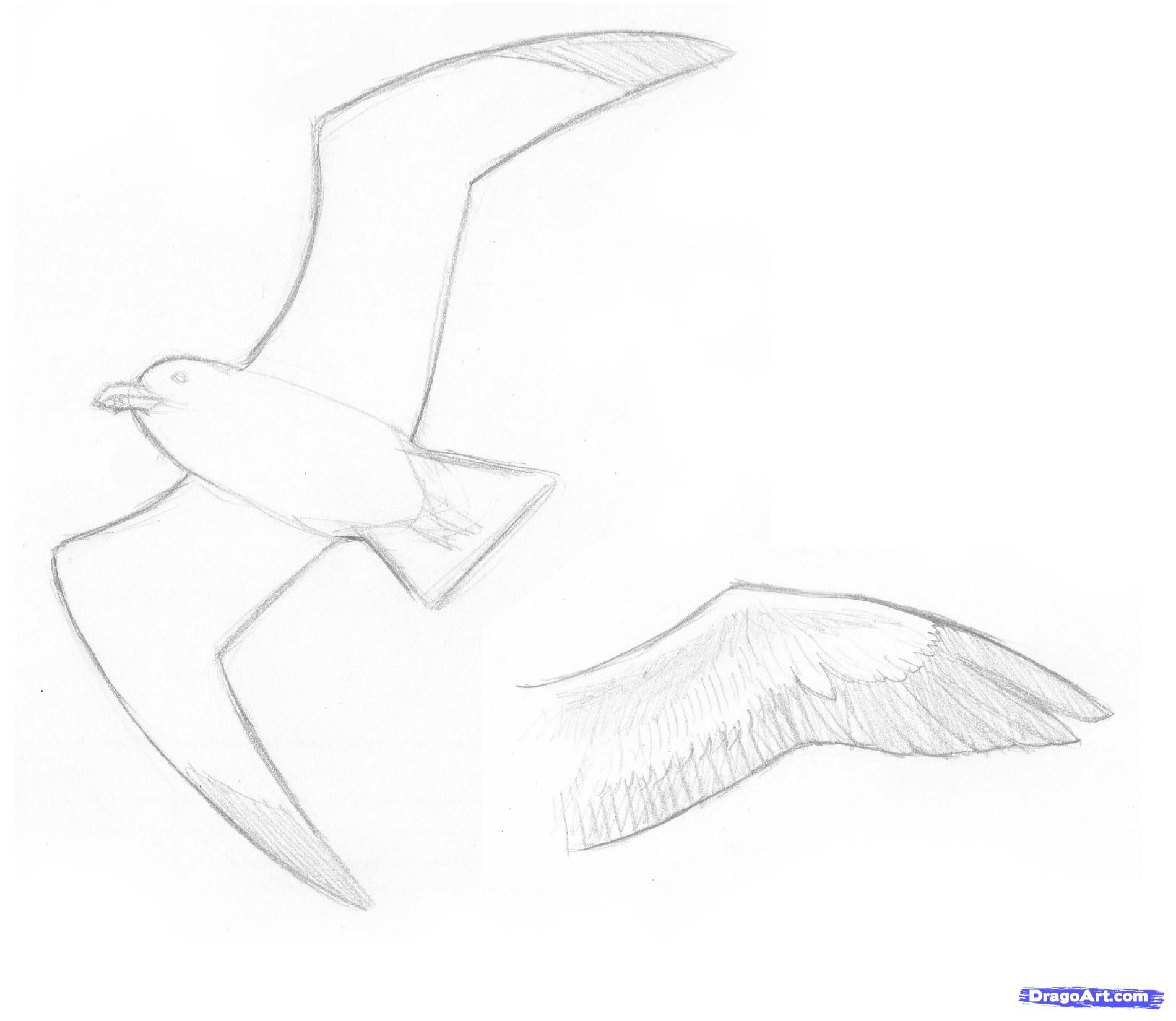 How To Draw Seagulls Step By Step Birds Animals Free