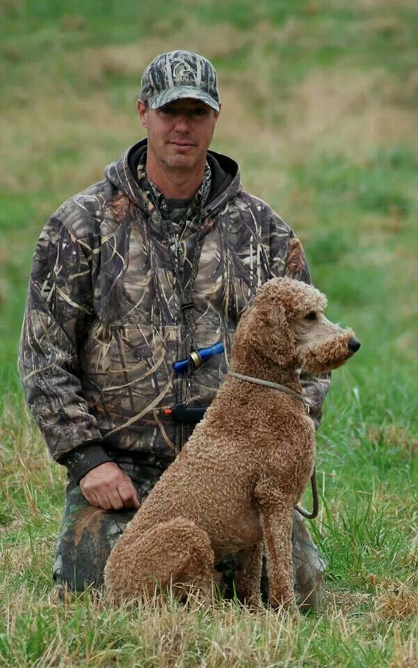 Pin On Manly Standard Poodle Cuts