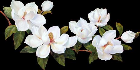 Transparent Flowers Magnolia 243 Transparent Flowers Magnolia Tattoo Small Flower Tattoos