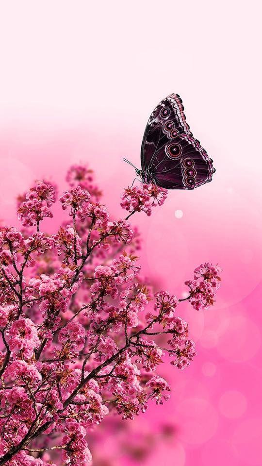 Pin By Reene Hollingsworth On Wings Butterfly Wallpaper