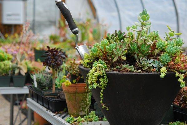 sukkulenten pflanzen garten balkon balkon pinterest schatten pflanzen und landschaftsbau. Black Bedroom Furniture Sets. Home Design Ideas
