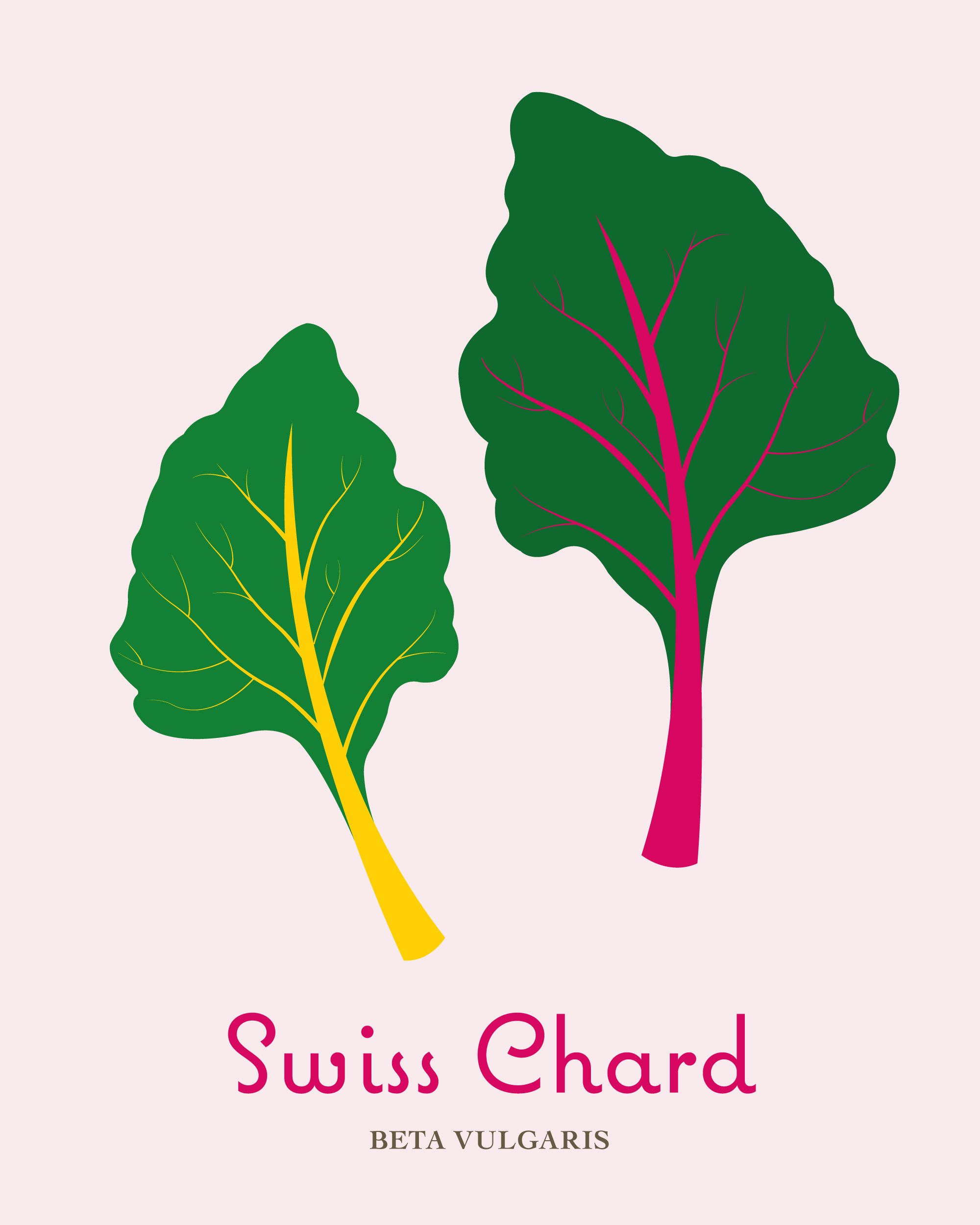 Swiss Chard Modern Kitchen Print In Pink And Green