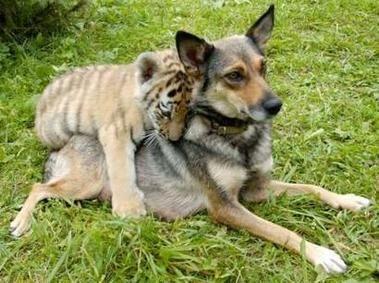 And everyone needs a dog! #adorablepix #petlove #lovemydog