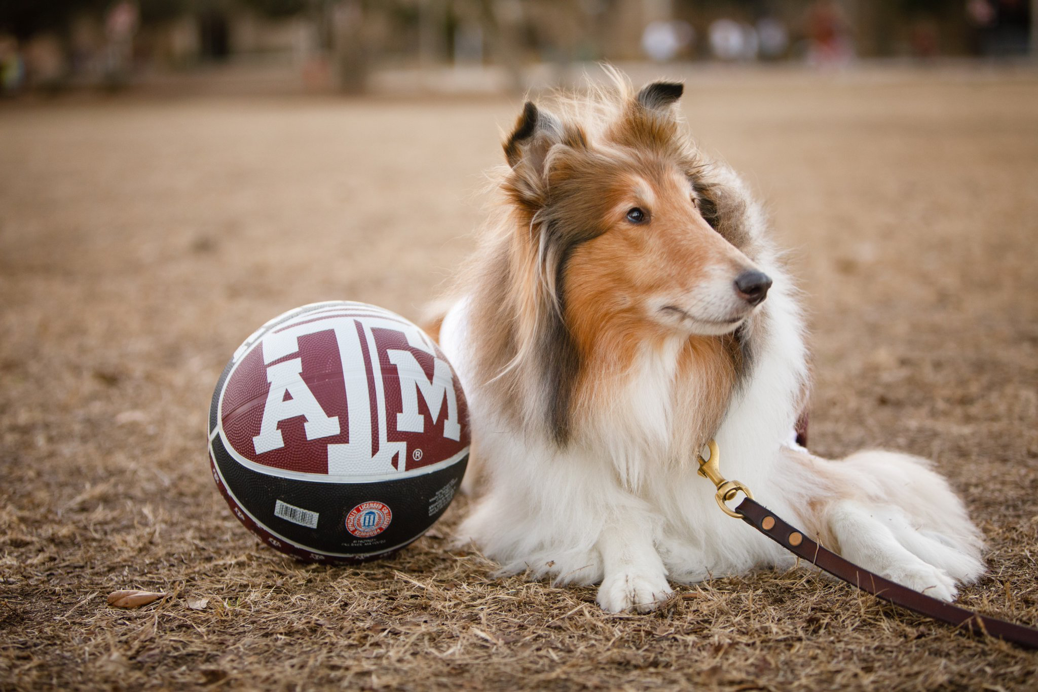 Reveill Reveille Ix Loves Her New Basketball Miss Rev Ix Texas A M