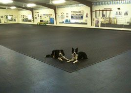 Doggy Daycare Flooring Rubber Flooring Doggie Day Care