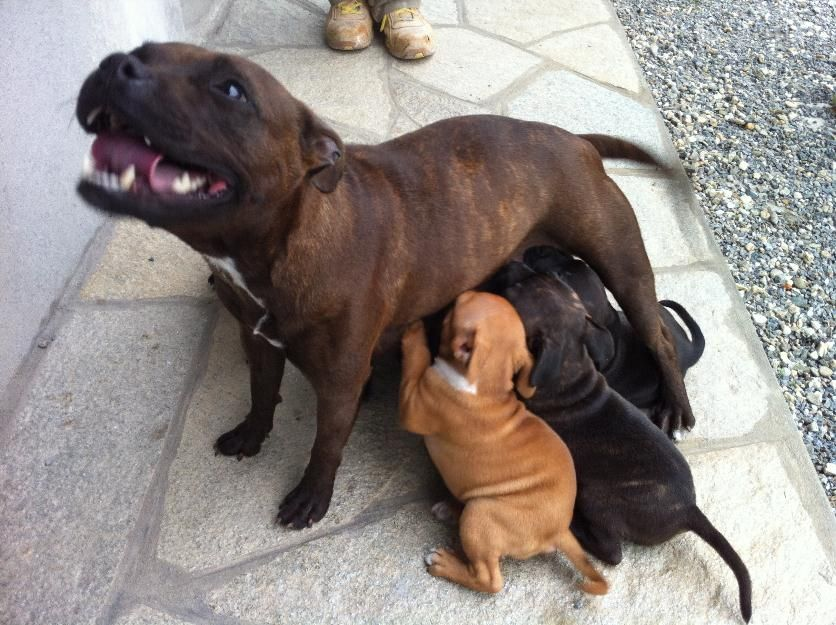 Mummy and her babies...God these dogs are adorable