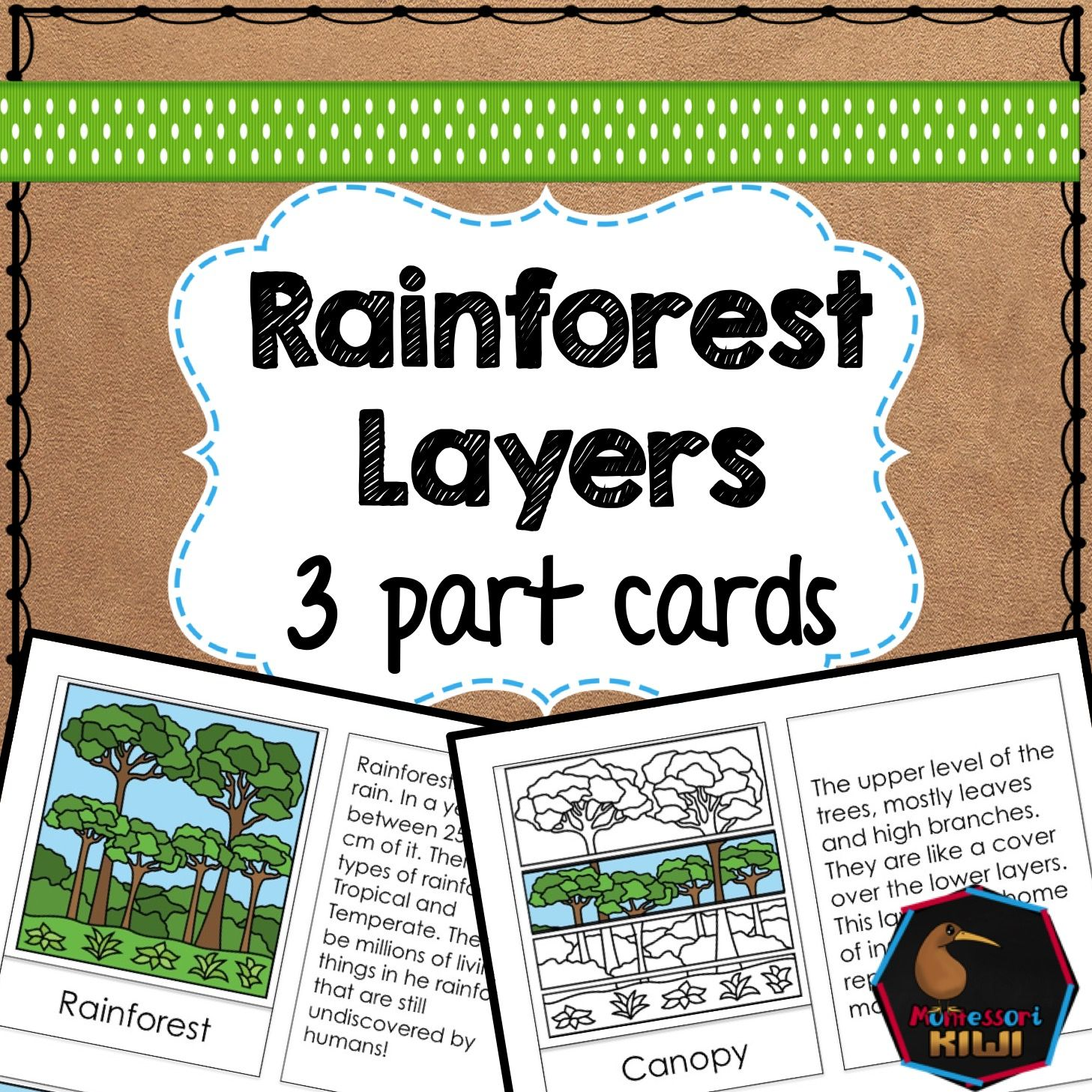 Rainforest Layers Elementary Activity South America Geography 3 Part Cards