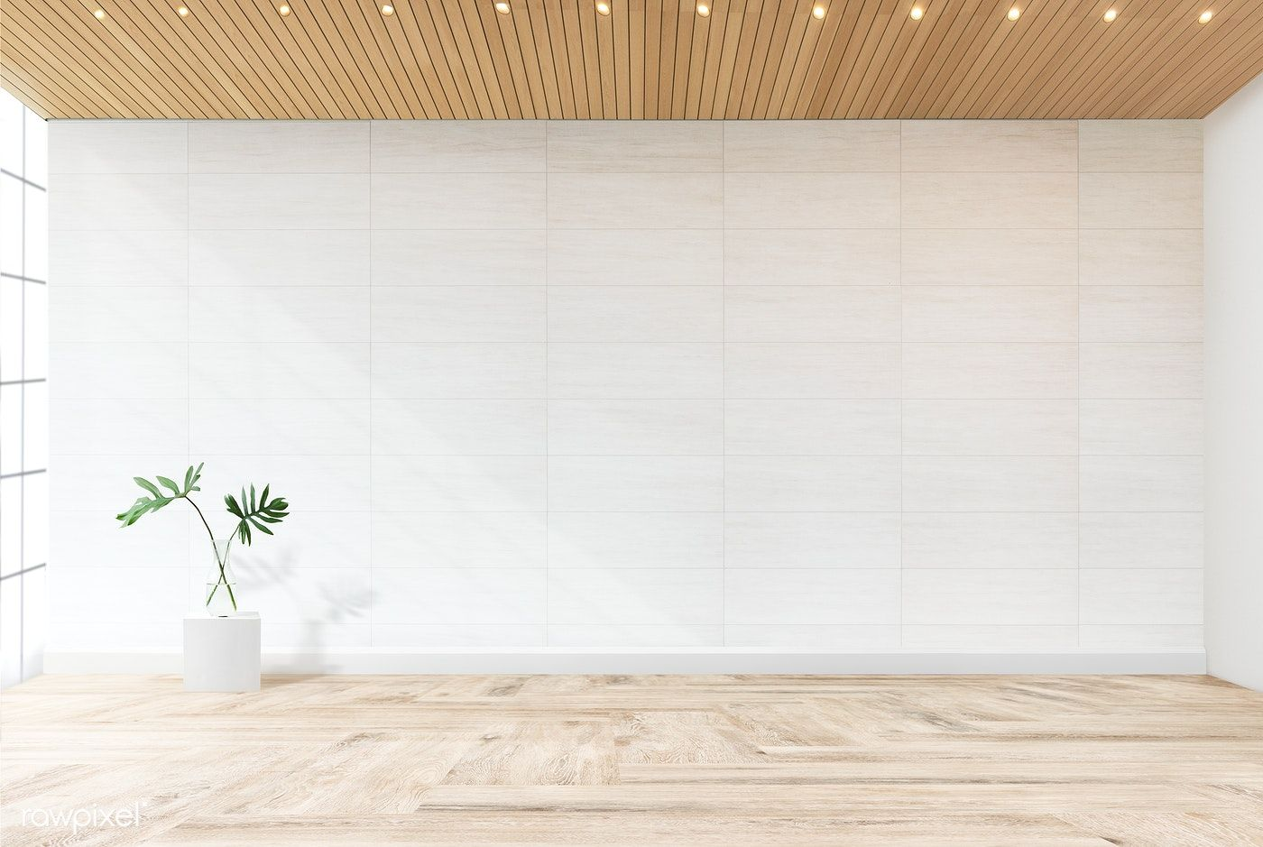Plant Against A White Wall Mockup Free Image By Rawpixel Com White Walls Empty Room Room
