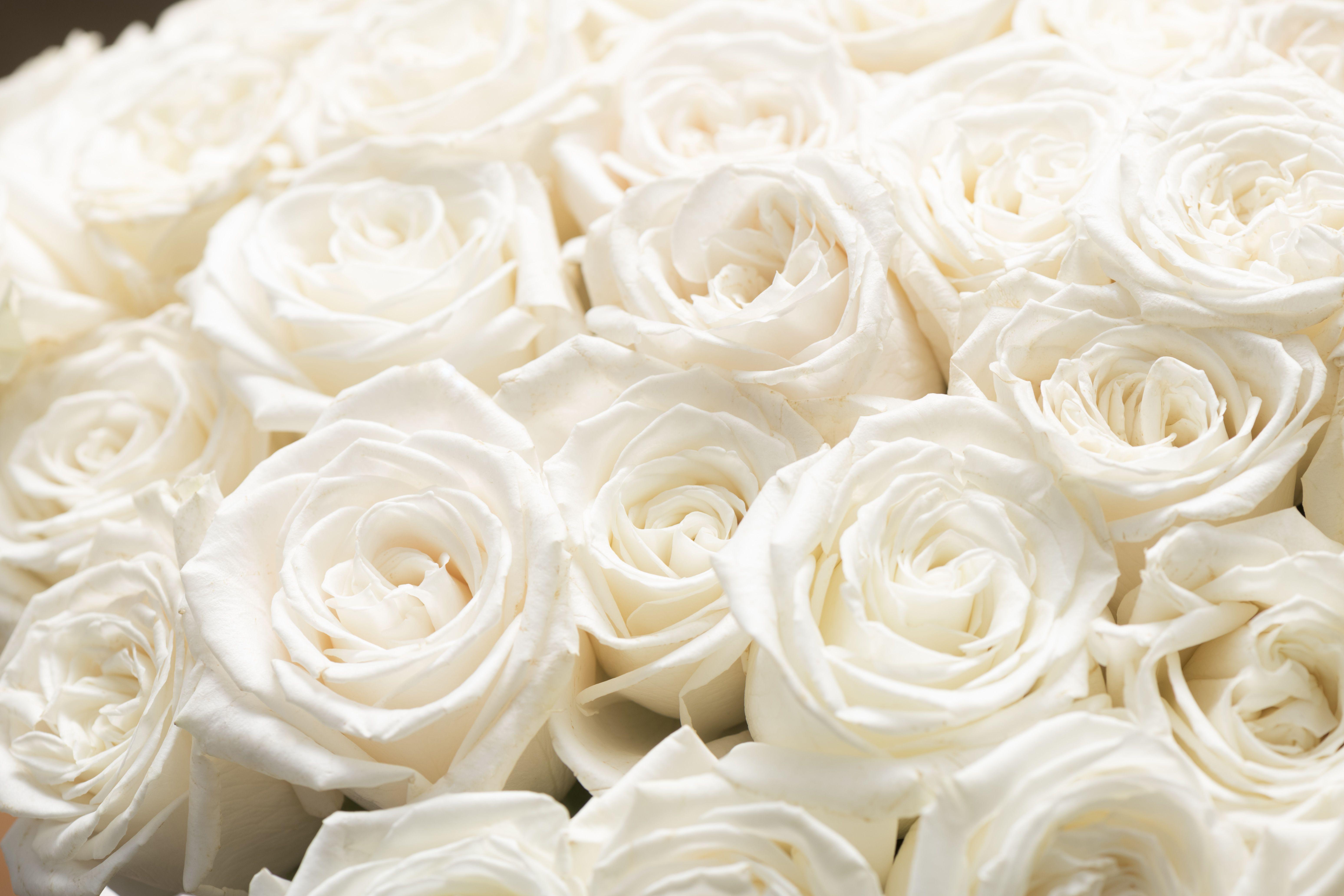 Epingle Sur Les Collections De Bouquets Rosa Unica