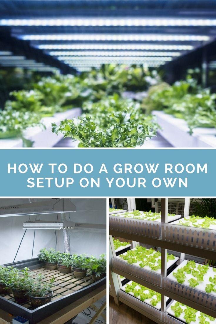 Grow Room Setup: How To Have The Best Grow Room Setup