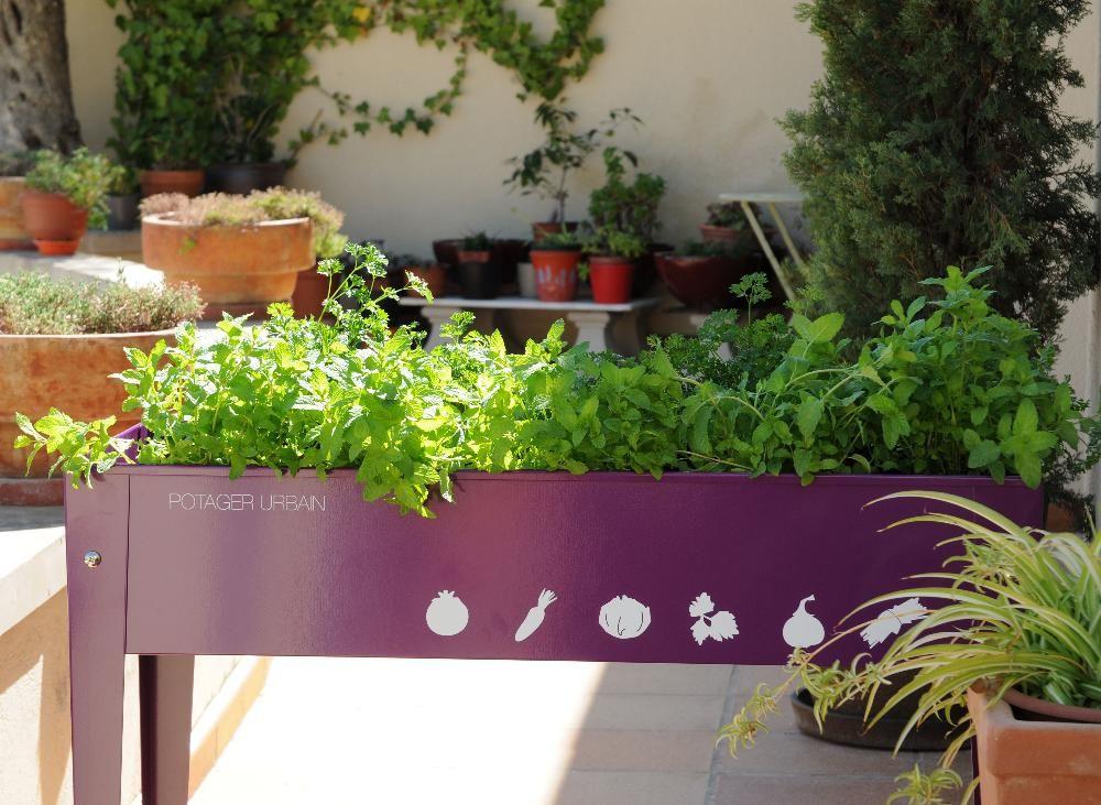potager sur lev en m tal aubergine vive le carr potager pinterest. Black Bedroom Furniture Sets. Home Design Ideas