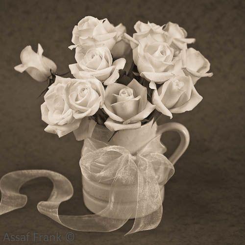 White roses in a vase \\ Assaf Frank