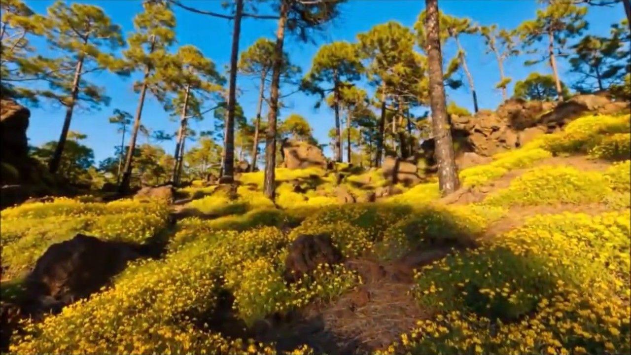 Nuestro Insolito Universo El Jardin Del Eden Jardin Del Eden Jardines Y Libros De Angeles