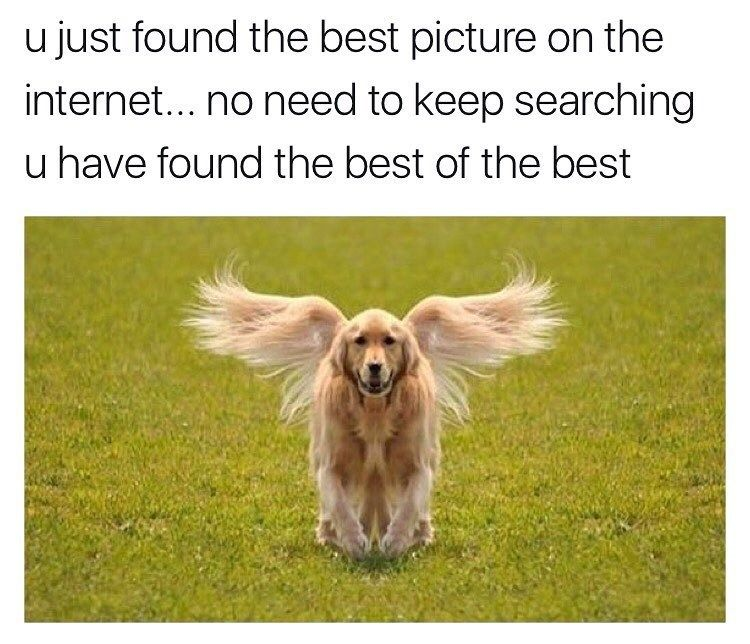 21 Funny Memes To Start Your Saturday Right #funnydogs