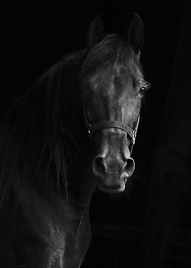 Black horse - I want one...