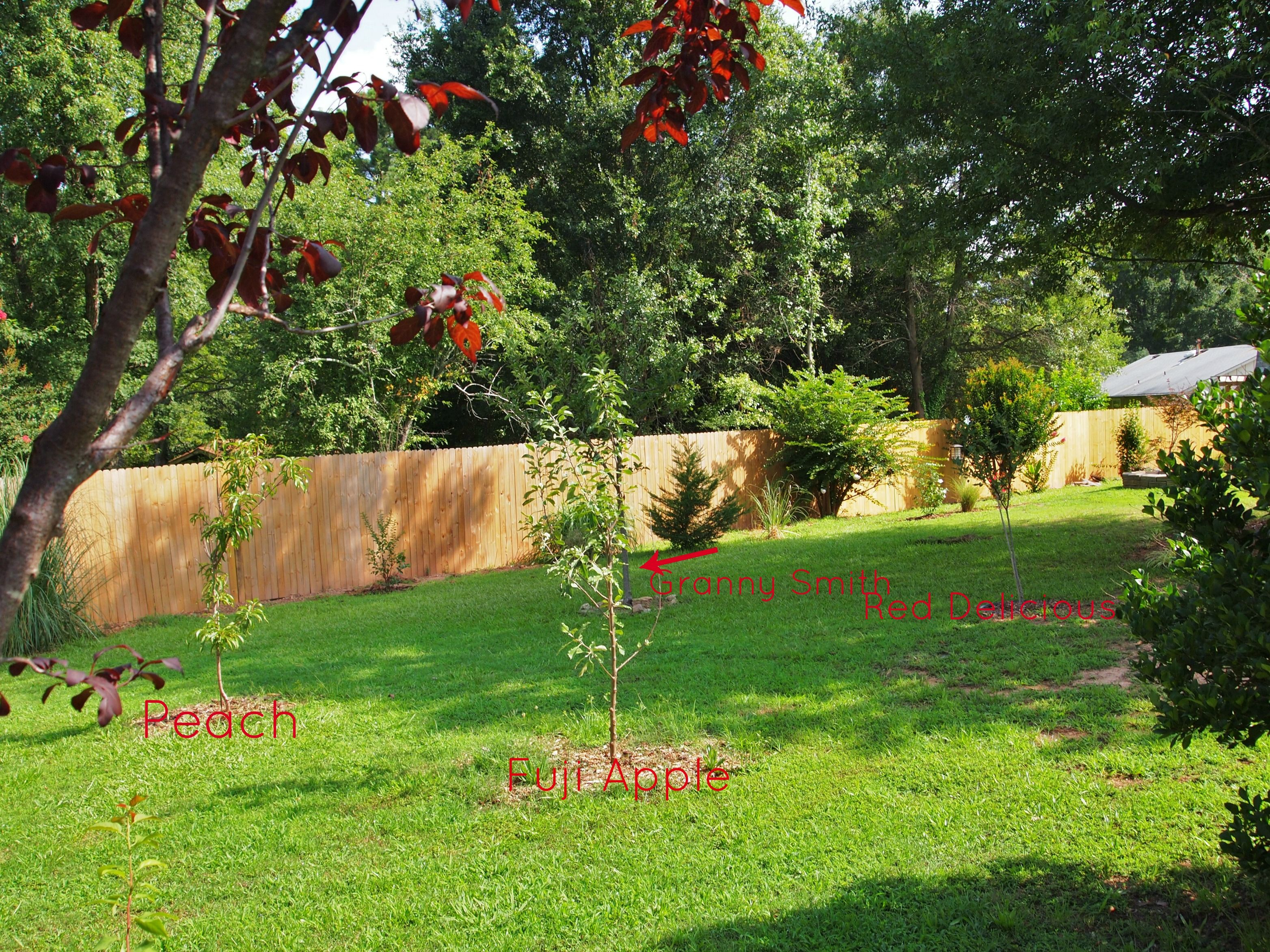 stunning small backyard orchard pictures design ideas