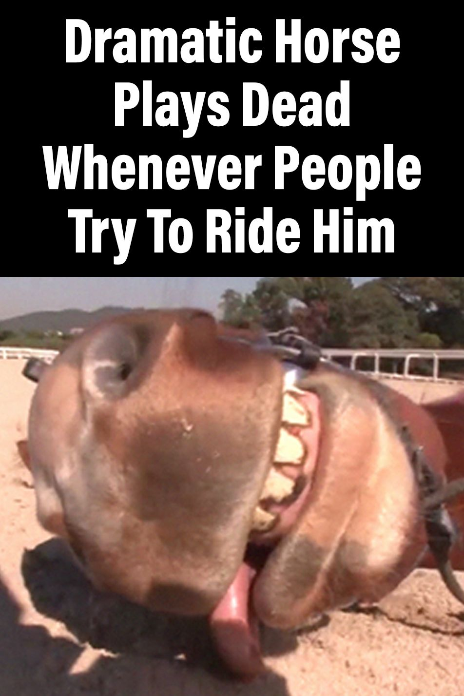 how to ride him good