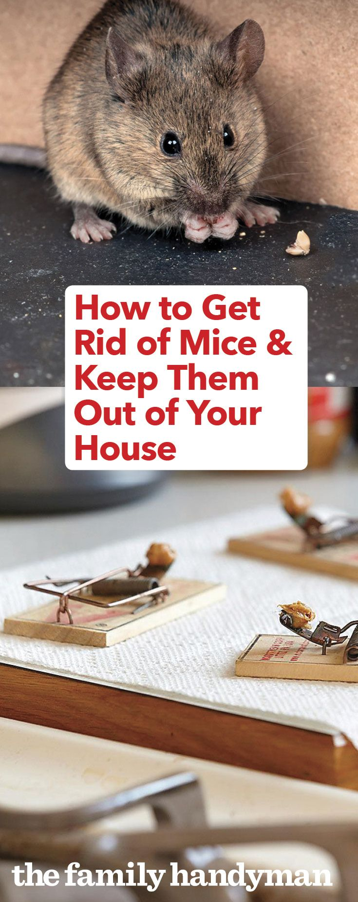 How To Keep Mice Away And Have A Mouse Free House Keep Mice Away Getting Rid Of Mice Catch A Mouse