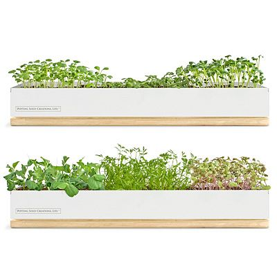 Look What I Found At Uncommongoods Micro Green Kits For 5 99 Uncommongoods Microgreens Growing Microgreens Windowsill Garden