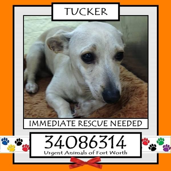 tucker located in fort worth tx to be destroyed 12 31 2016 helping hand pinterest. Black Bedroom Furniture Sets. Home Design Ideas