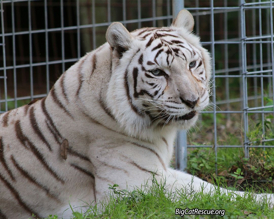 Zabu is getting a dental, today. Watch it streaming live at http ...