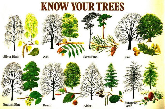 Know Your Trees Tree Identification Leaf Identification Tree Id
