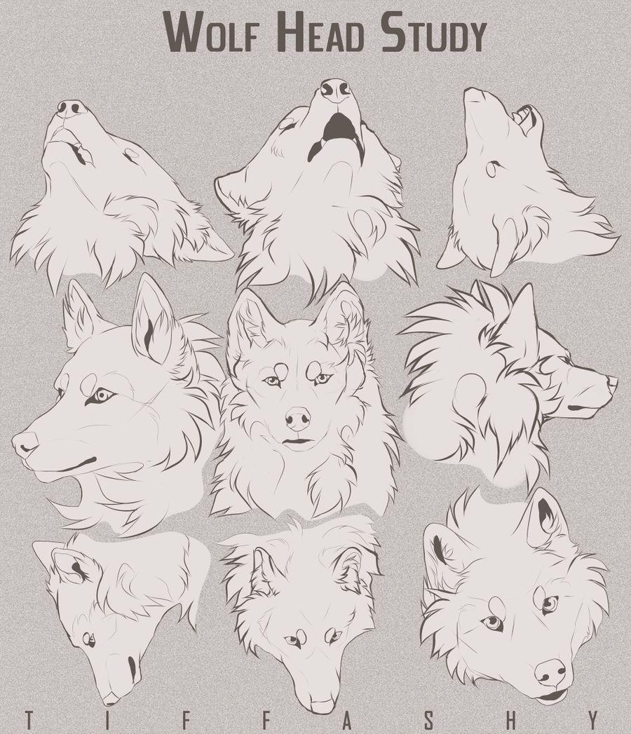 Wolf Head Study Tutorial By Tiffashy On Deviantart Wolf Sketch Wolf Face Drawing Anime Wolf Drawing