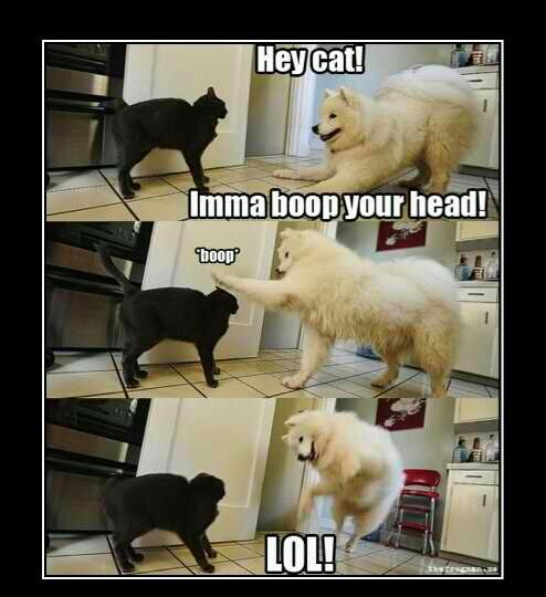 Lol, my cats do this to eachother all the time.