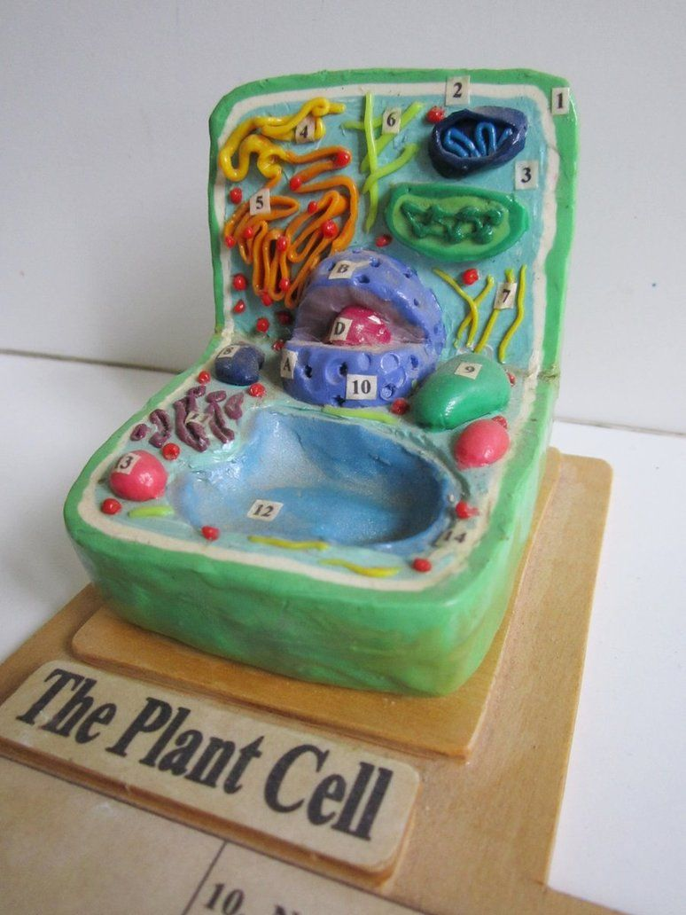 3d Plant Cell Diagram With Labels
