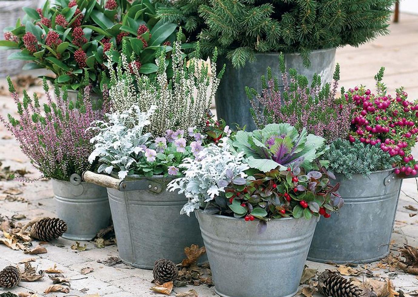 7x Wintertuin Inspiratie : Seasons tuintips voor de herfst babyfoot