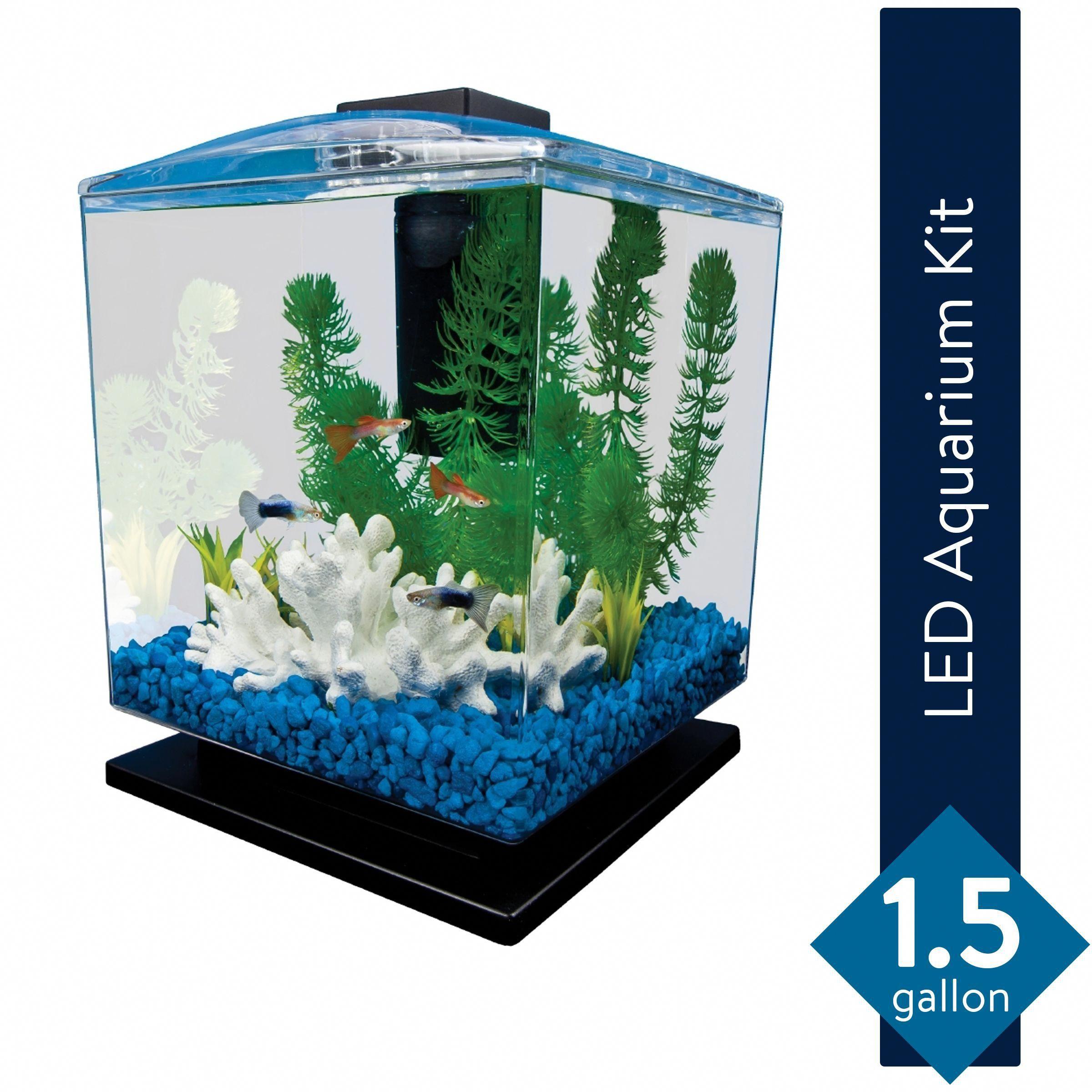 Stunning Salt Water Aquarium In 2020 Aquarium Aquarium Design Saltwater Aquarium