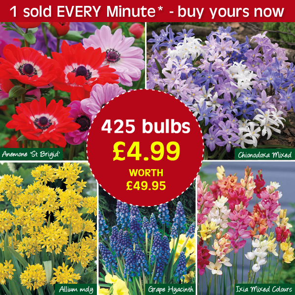 You only have until midnight tonight to order this bumper collection 425 spring flowering bulbs 5 varieties just 499 httpsgooqhr185 to receive mightylinksfo