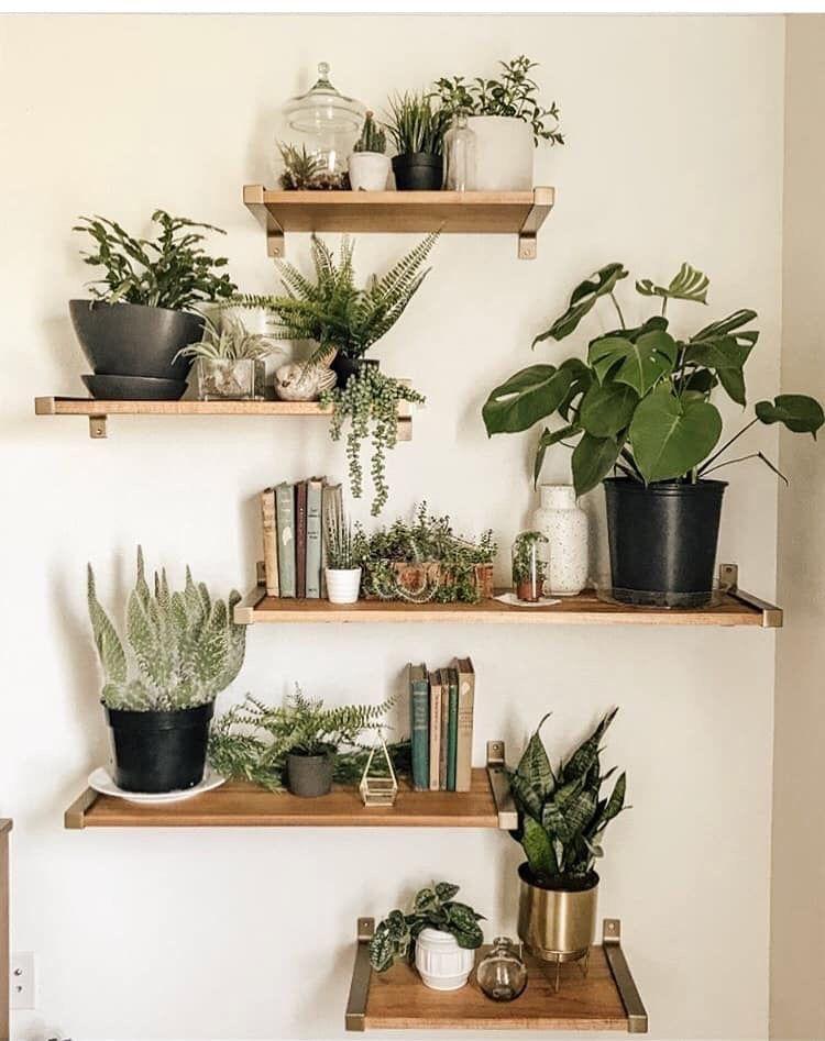 Trailing Indoor Plants For Shelves