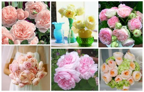 Ideas for flowers that aren't peonies
