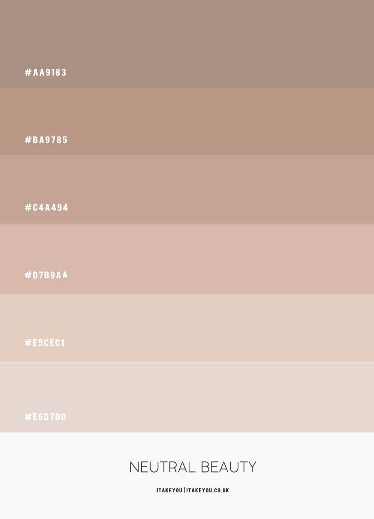 Neutral Color Scheme –  ColourPalette 49