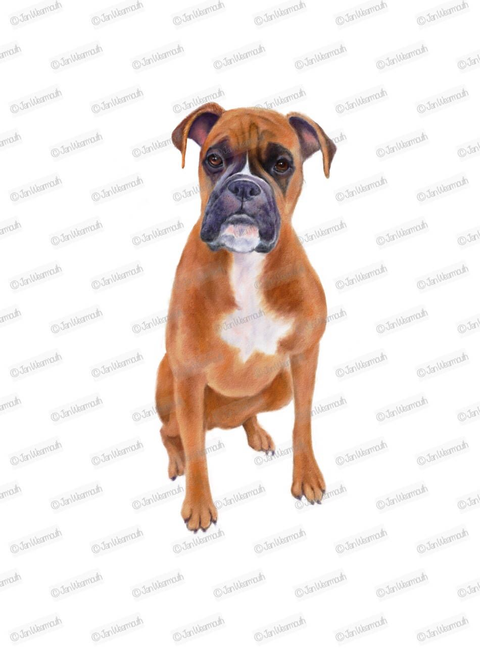 Dog Clipart Boxer Dog Instant Download Digital Art Watercolor
