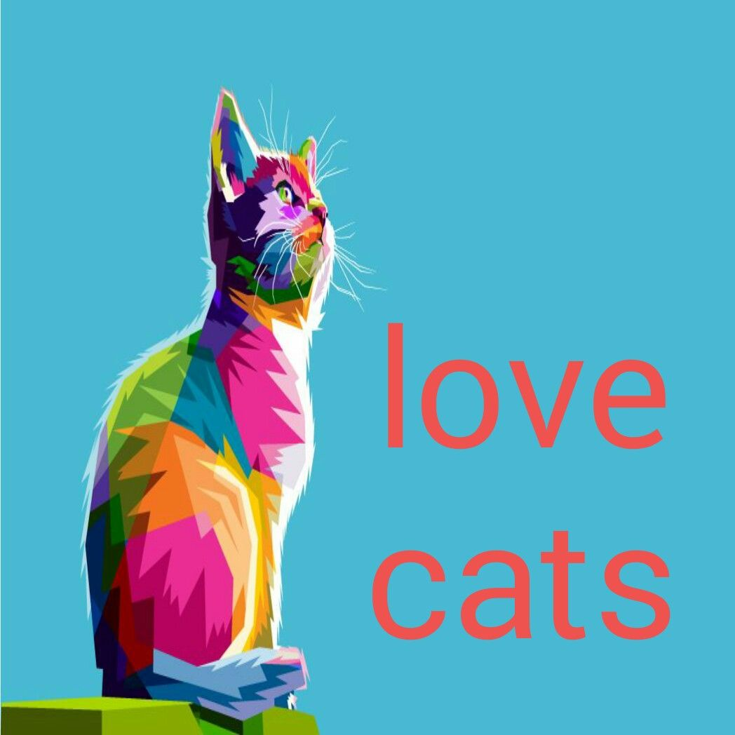 Pin on cats love