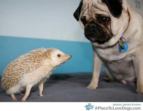 My 2 Favorite Things Isabelle Baggetta Cute Hedgehog Funny