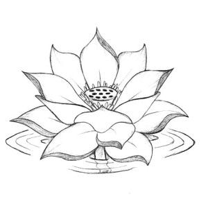lotus flower growing coloring page kids play color - Lotus Flower Coloring Page