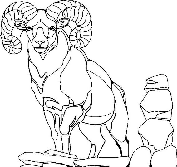 Mountain Goat Coloring Pages Animal Coloring Sheets For